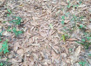 Encontre a cobra escondida na imagem. Foto: Reprodução