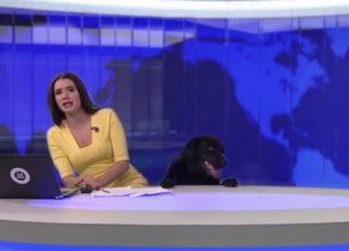 Apresentadora se assusta com cachorro. Foto: Reprodução