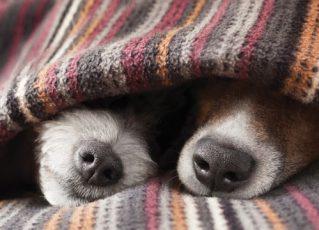 Cães no frio. Foto: Reprodução de Internet