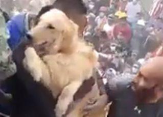 Cachorro é resgatado de escombros no México. Foto: Reprodução/Facebook