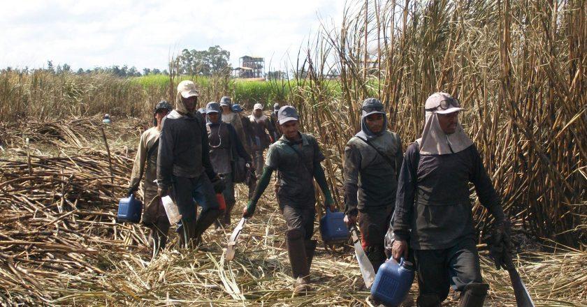 Trabalhadores rurais. Foto: Rreprodução