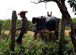 Fiscais resgatam grupo que levava gado a pé em trecho de 930 km. Foto: Divulgação
