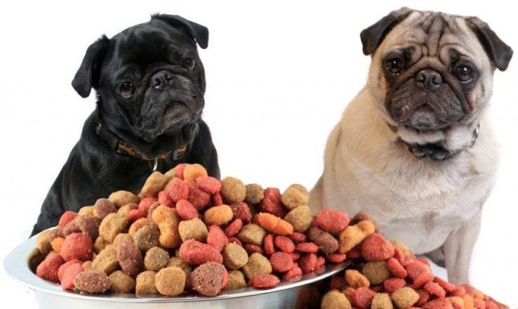 Cães. Foto: Reprodução de Internet