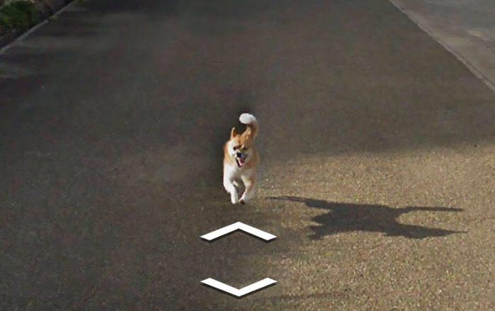 Cão persegue carro e aparece em todas as fotos do bairro no Google Street View. Foto: Reprodução de Internet