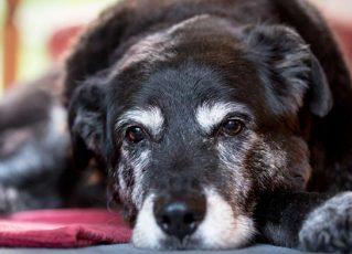 Cão. Foto: Reprodução de Internet