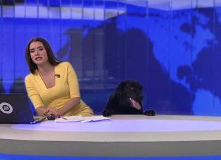 Cão interrompe telejornal ao vivo e deixa âncora estática. Foto: Reprodução de Internet