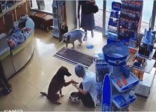 Cadela entra em farmácia e mostra pata machucada. Foto: Reprodução de Internet