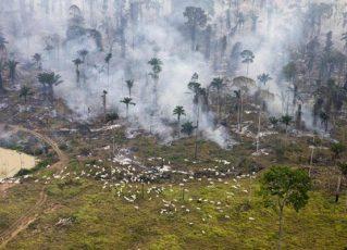 Devastação na Amazônia. Foto: Reprodução de Internet