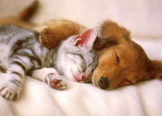 Gato e cão. Foto: Divulgação