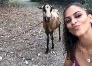Mulher é atacada por cabra após tentar fazer 'selfie'. Foto: Reprodução de Internet