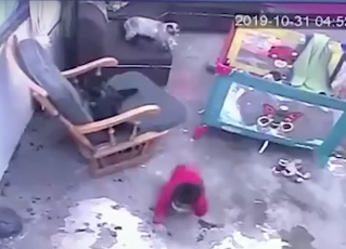 Gato impede bebê de cair de escada. Foto: Reprodução/Youtube