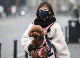 Cão tem resultado positivo para coronavírus e vai para quarentena. Foto: Reprodução de Internet